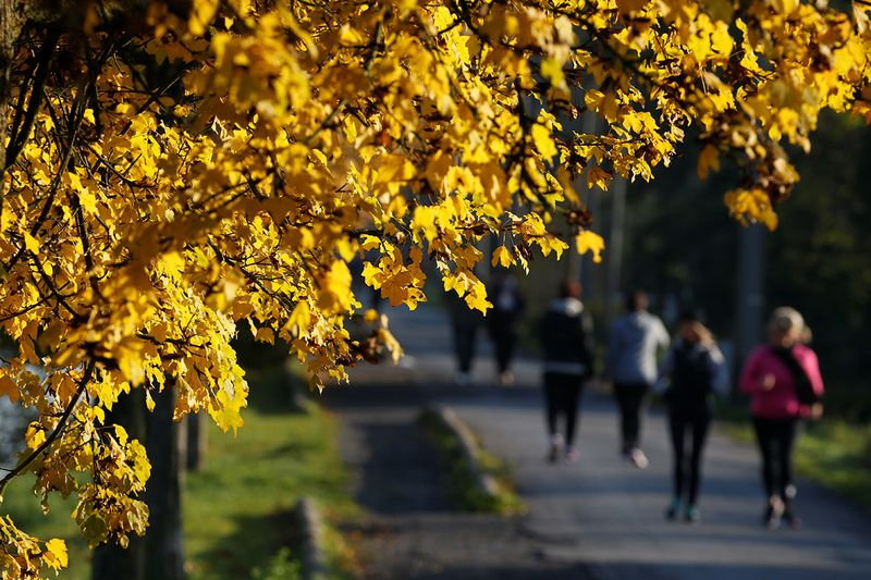 People walk and run as golden leaves colour the autumn along the canal in Proville, France.