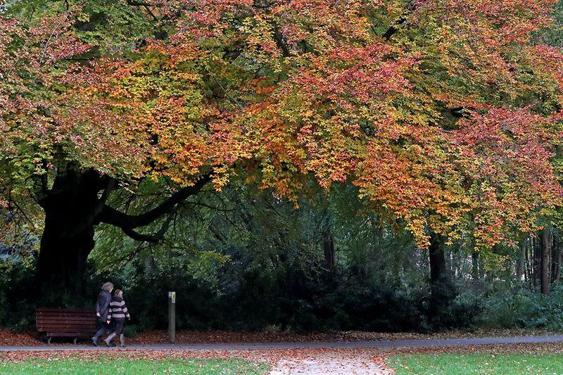 People walk in a park in Gaasbeek, Belgium.