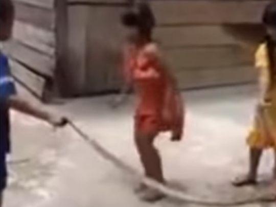 Viral snake jump video