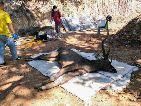Deer plastic bags thailand
