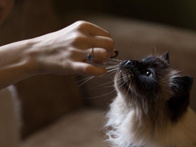 cat-eating08