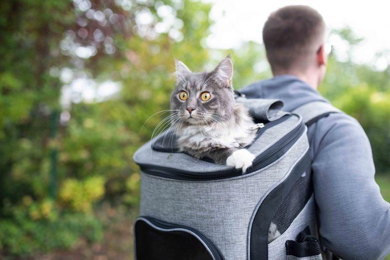 cat-in-a-bag06