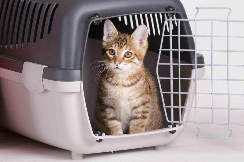 cat-in-a-box07