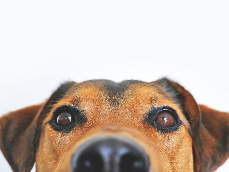 travel-Good-boy-dog02