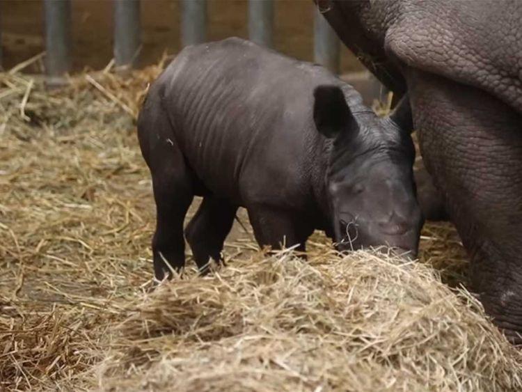 191202 rhino