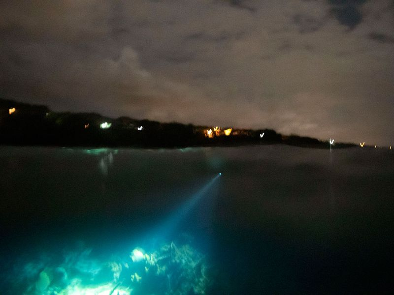What_Can_Be_Saved_Coral_Night_Fishing_Photo_Gallery_04793