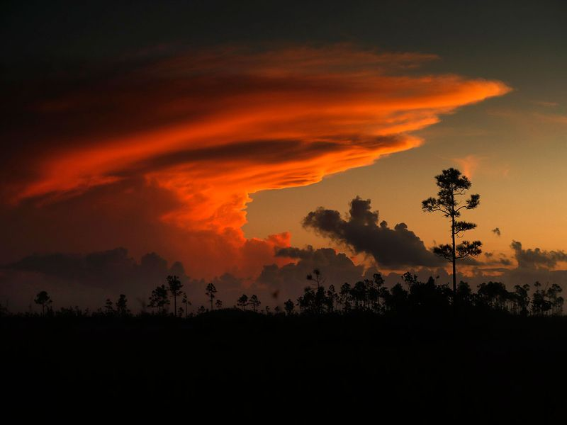 What_Can_Be_Saved_Everglades_26581