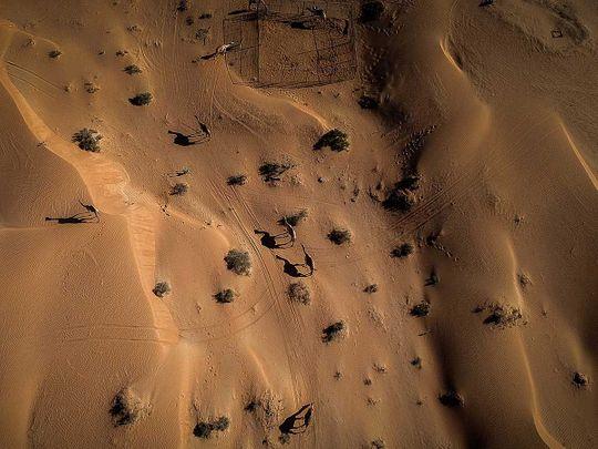 191205 camels