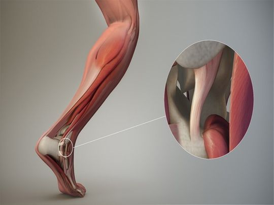 Tendon stem cells can revolutionise injury recovery
