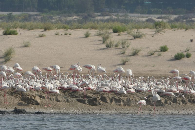 NAT 191210 Abu Dhabi Birdathon's Flamingos Return to Al Wathba Wetland Reserve-1575986479750