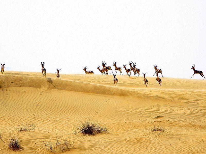 UAE-32_44