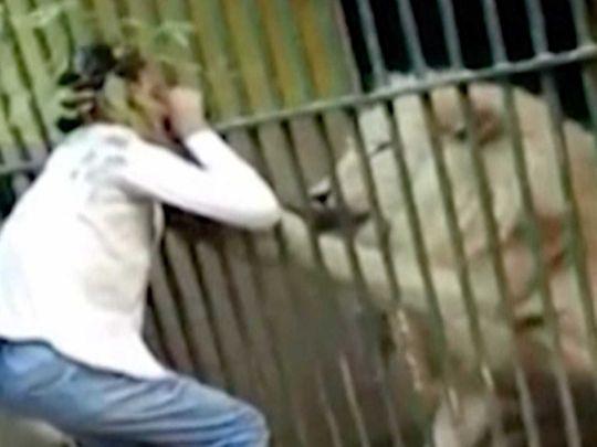 Lion attach