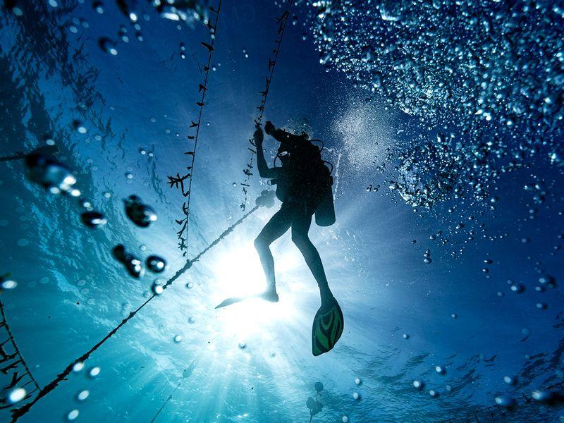 Diver Lenford DaCosta