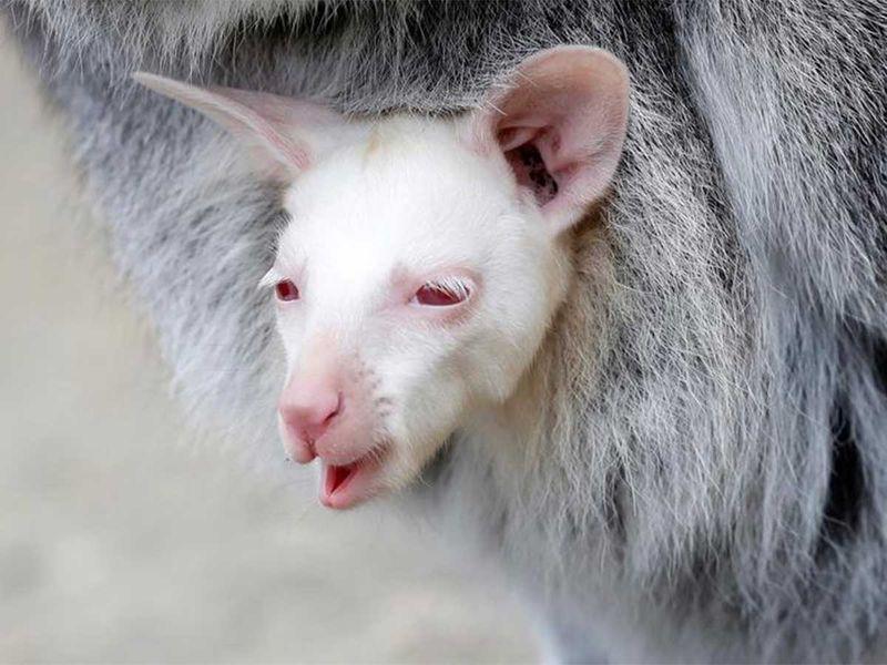 191215 albino