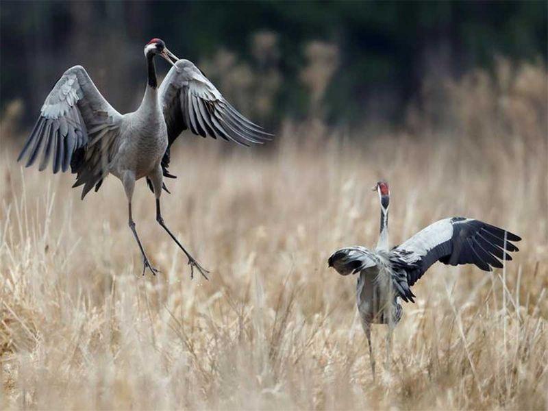 191216 cranes