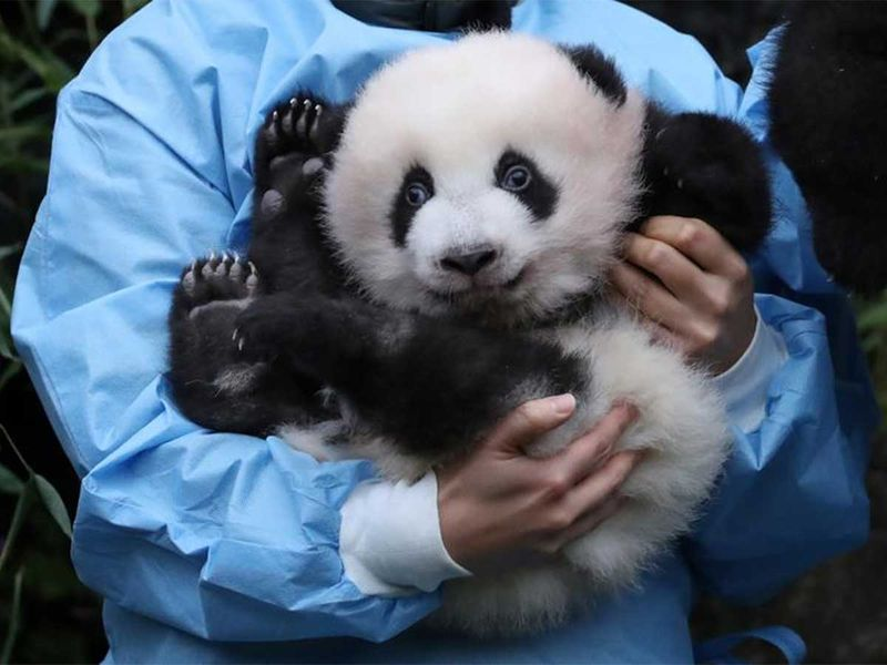 191216 panda