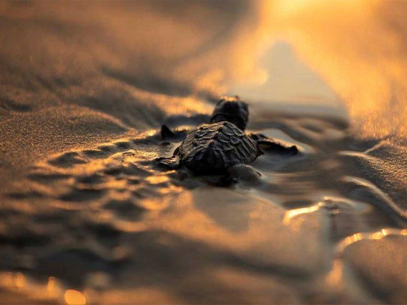 191216 sea turtle