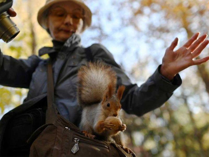 191216 squirrel
