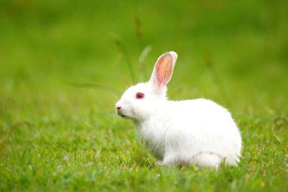 OPN Rabbit-1576666915193