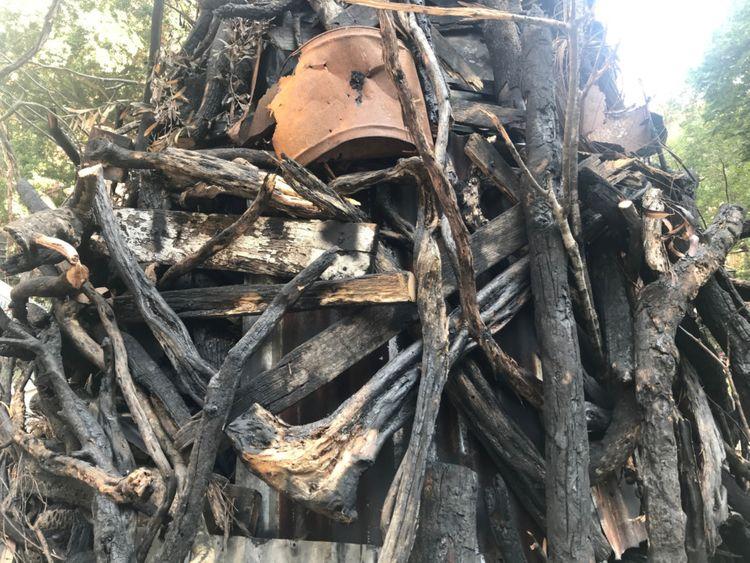 FTC Burnt Christmas tree1-1577013617625