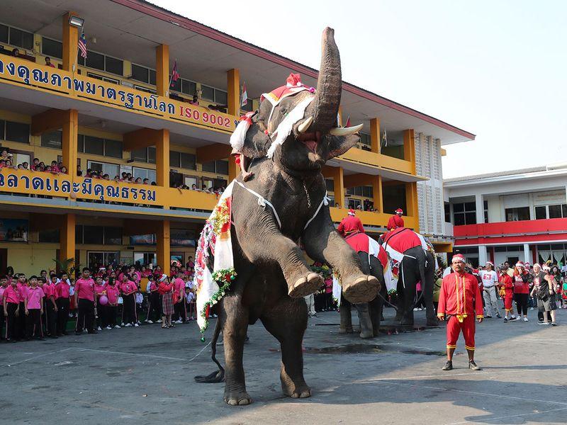 Copy-of-Thailand_Elephant_Christmas_78573