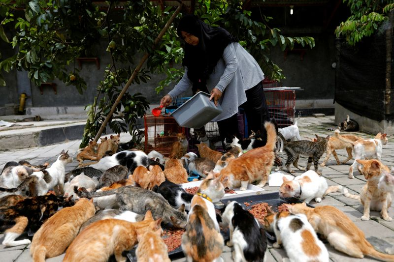 Copy of 2019-12-23T103051Z_8302128_RC2Y0E9VIHJ5_RTRMADP_3_INDONESIA-CATS-1577183549997