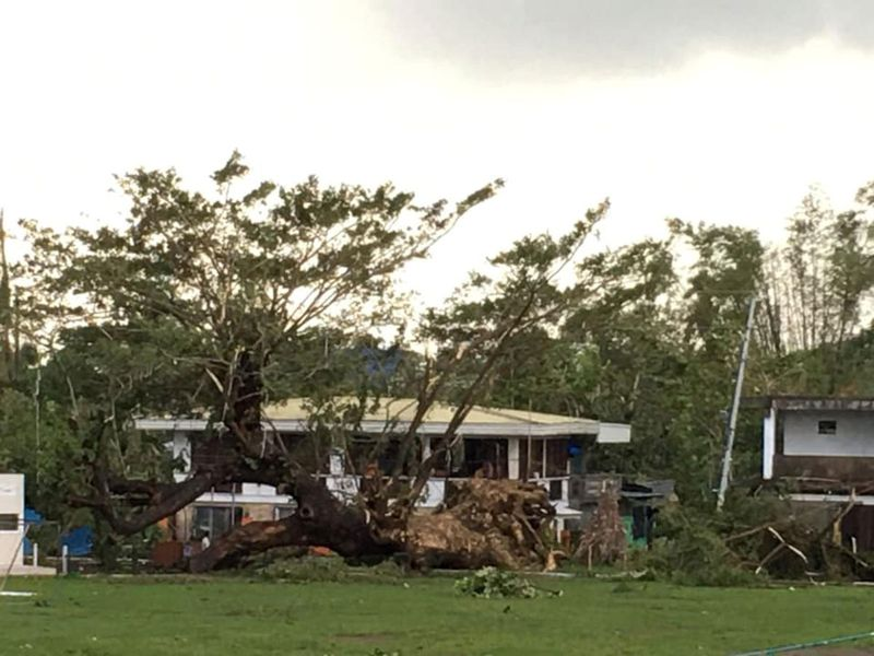 Fallen trees are seen after Typhoon Phanfone swept through Tanauan, Leyte, in the Philippines.