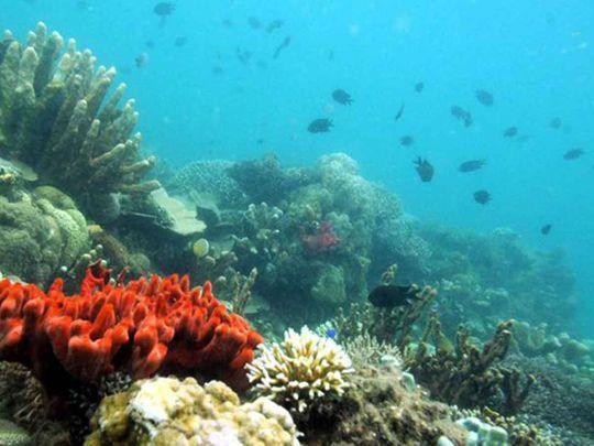 Palau bans 'reef-toxic' sunscreen