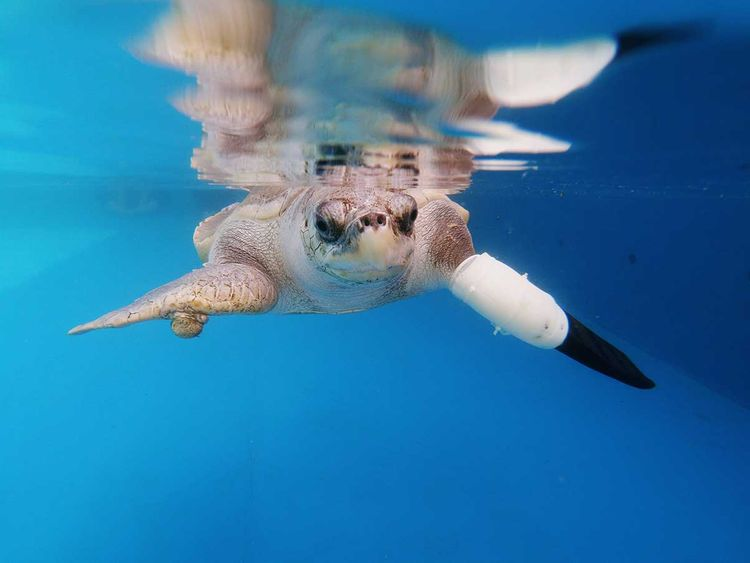 2020-01-13T075434Z_284625464_RC2VEE90K8HH_RTRMADP_3_THAILAND-ENVIRONMENT-TURTLES-(Read-Only)