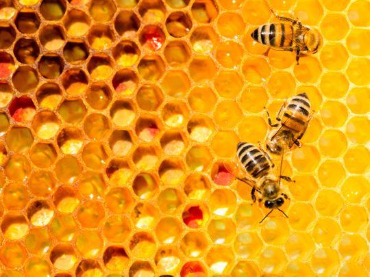 NAT BEE HIVE1-1579079945163