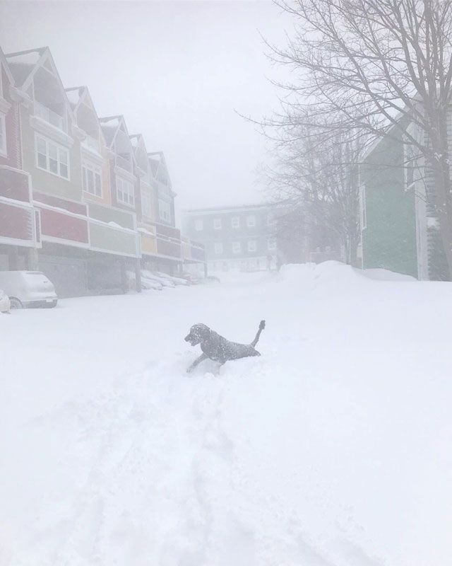 A dog is seen in a blizzard in St John's, Newfoundland and Labrador, Canada