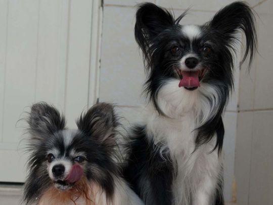 Hailey and Saphira