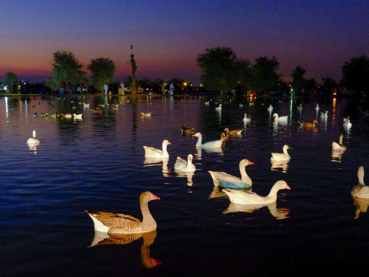 Al Qudra Lakes-1579583567771