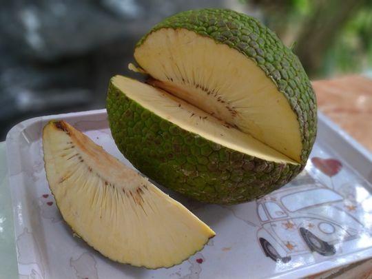 WLD breadfruit1-1579717821513