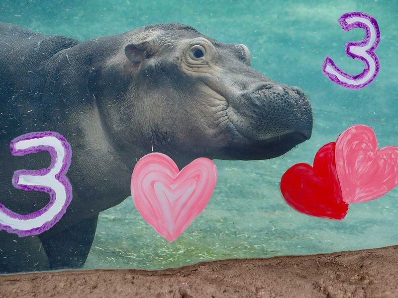 APTOPIX_Premature_Hippo_Birthday_23916