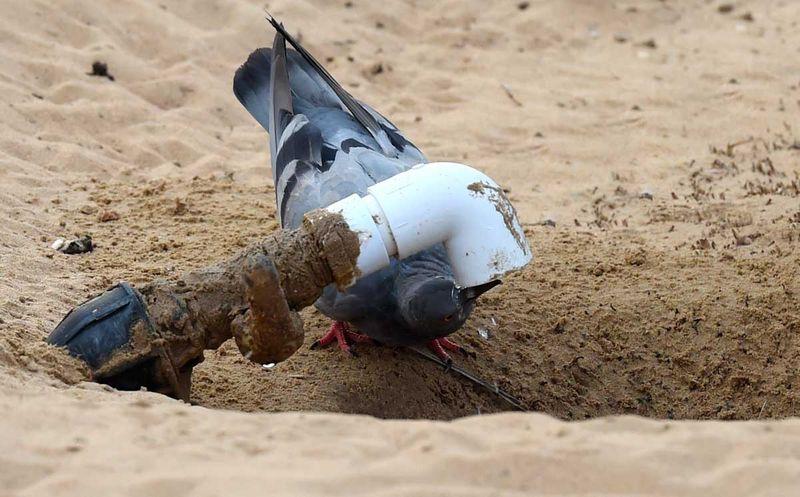 200126 pigeon