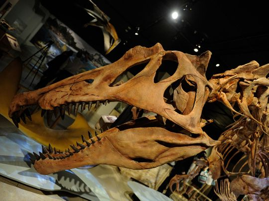 Remarkable meat-eating dinosaur species found in US