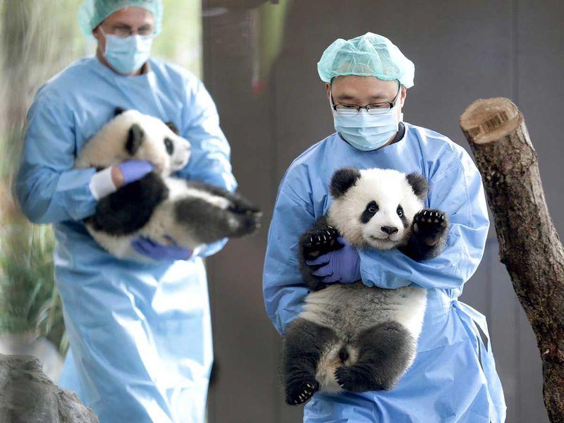 APTOPIX_Germany_Zoo_Pandas_80114