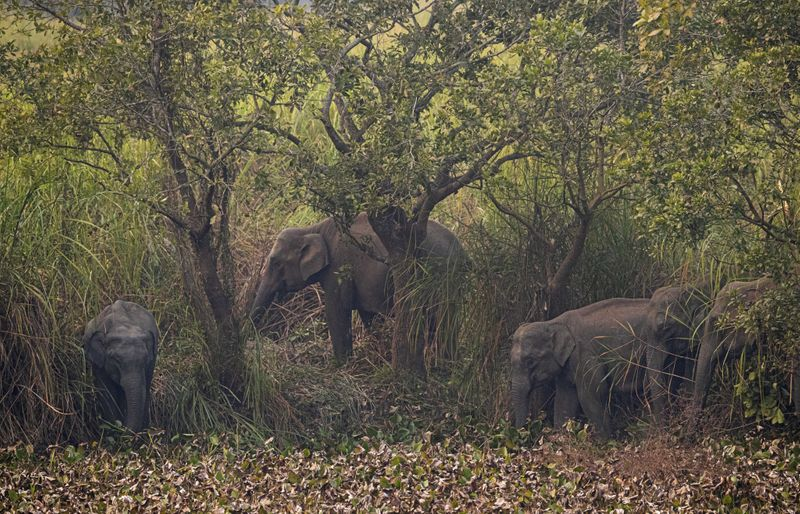 Copy of India_Wild_Elephants_31857.jpg-2fe4b-1580304458095
