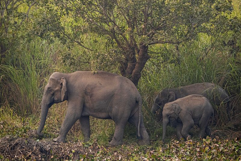 Copy of India_Wild_Elephants_53053.jpg-17651-1580304502975