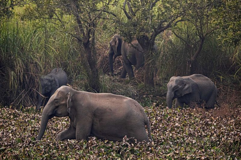 Copy of India_Wild_Elephants_59456.jpg-44adf-1580304508238