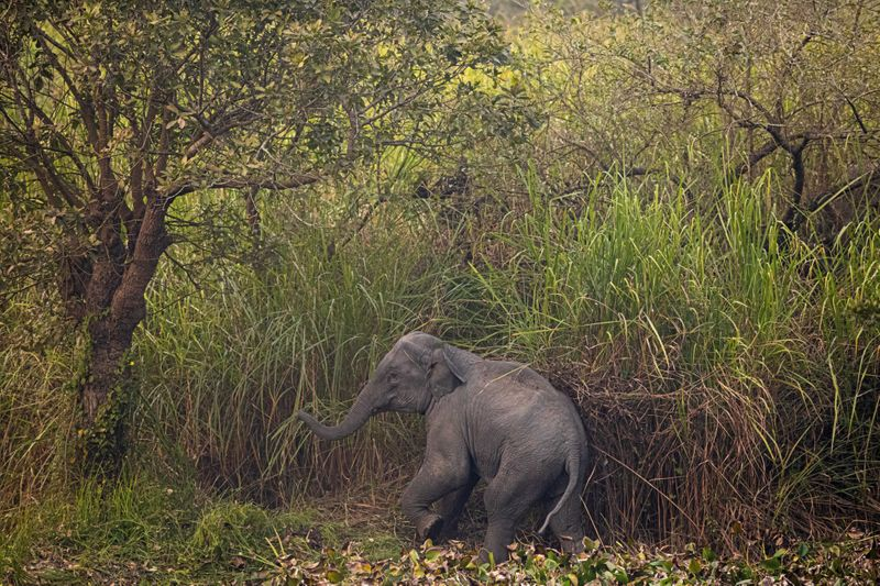Copy of India_Wild_Elephants_60381.jpg-a7ba9-1580304478508
