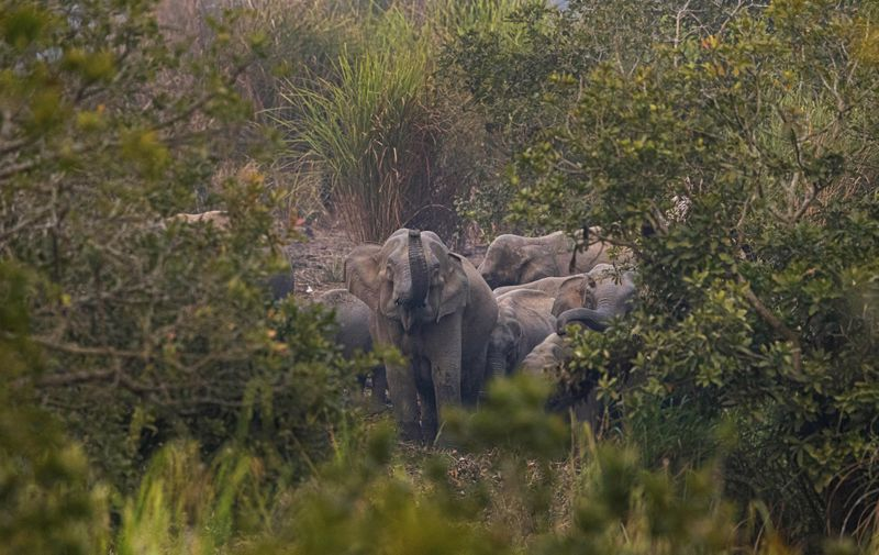 Copy of India_Wild_Elephants_72435.jpg-ab9c9-1580304497250