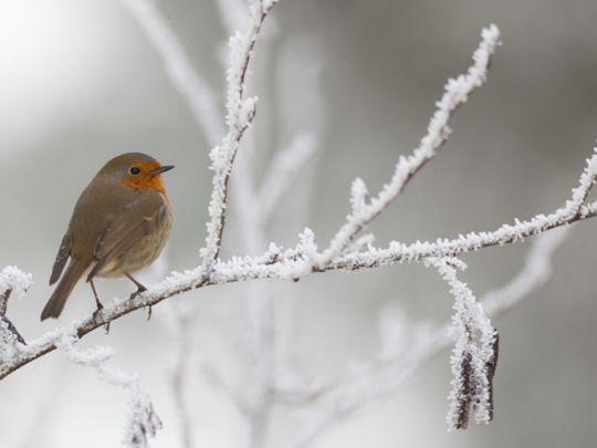 OPN 200131 BIRDS IN WINTER-1580472453697