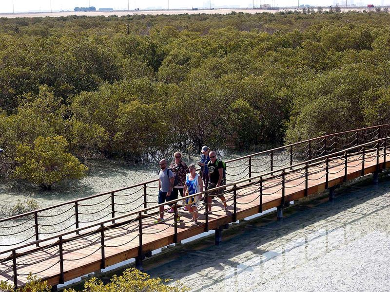 Photos New Mangrove Park In Abu Dhabi To Attracts Thousands Going Out Gulf News