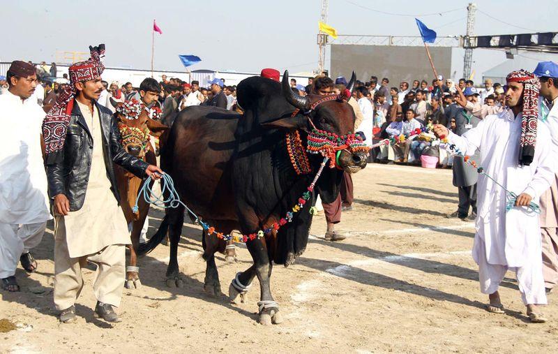 200208 festival 1