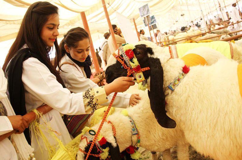 200208 goats expo