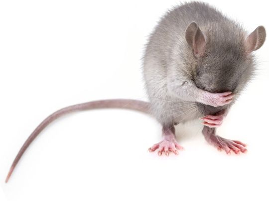 Mouse generic