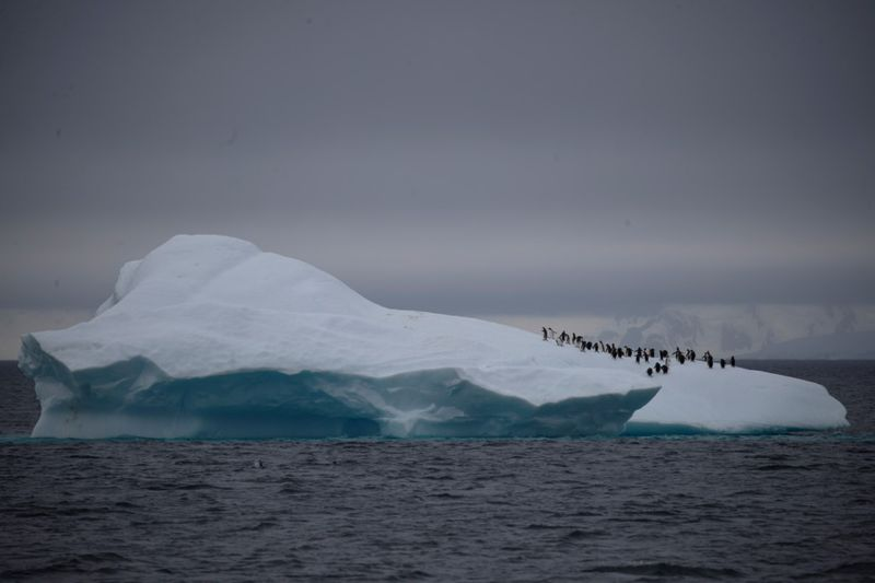 Copy of 2020-02-11T000331Z_1227200360_RC20YE957SAN_RTRMADP_3_CLIMATE-CHANGE-ANTARCTICA-PENGUINS-1581423702186