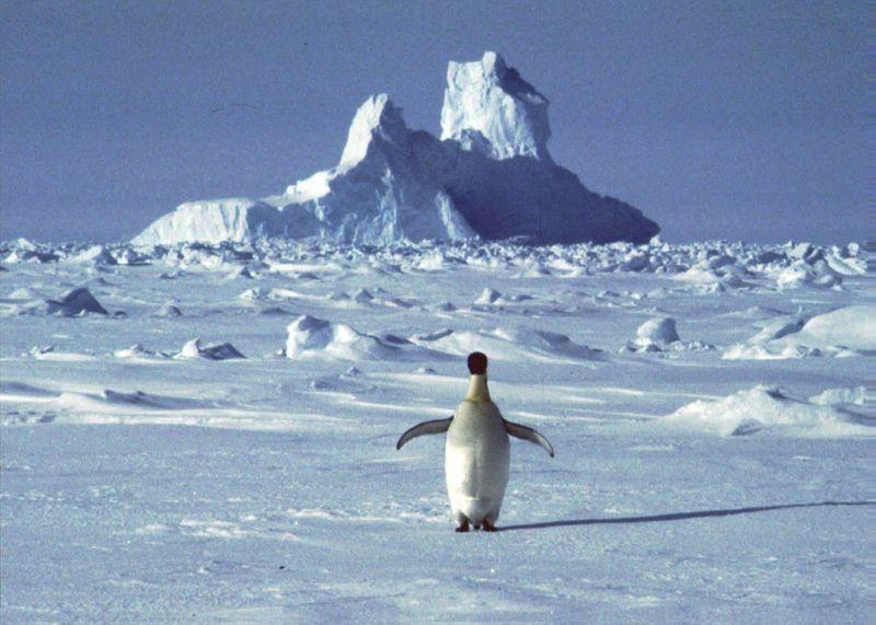 Copy of Antarctica-Heat_Record_57769.jpg-a14b6~1-1581605127264